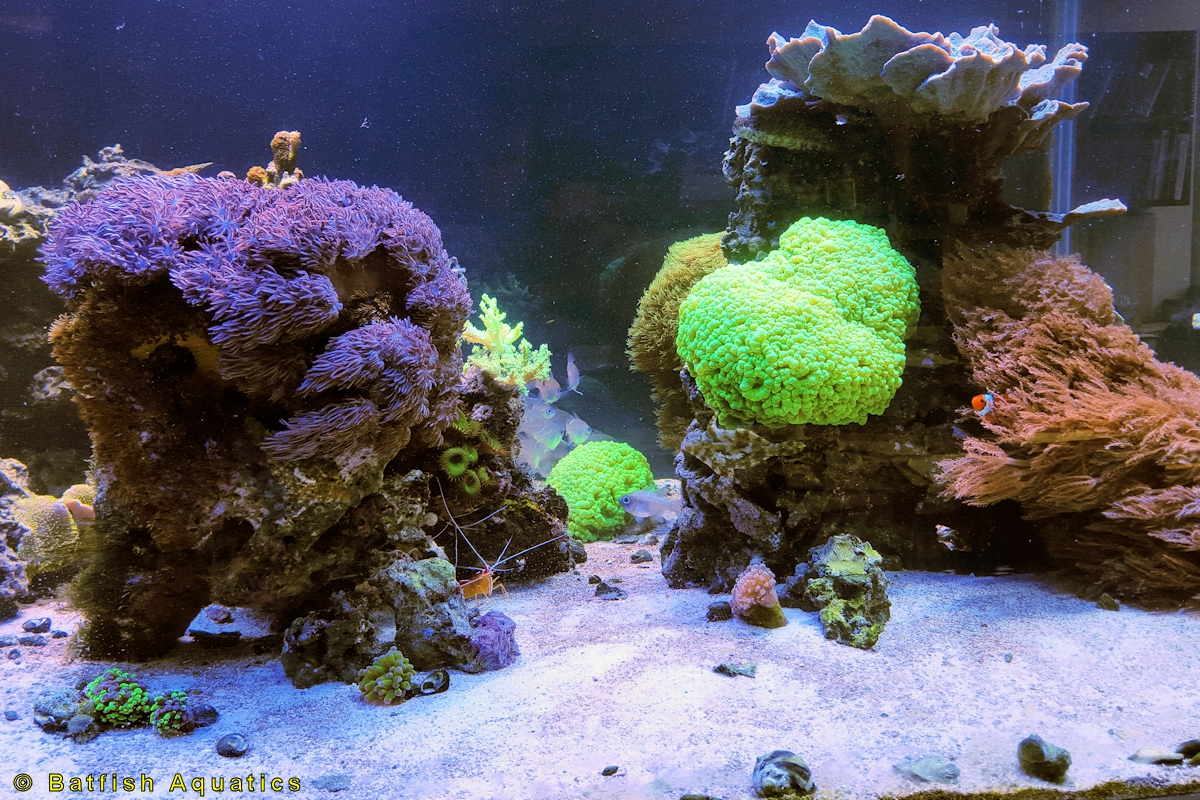 A marine reef aquarium with live coral